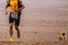 Gobi, la cachorra abandonada que corrió una maratón junto a un atleta profesional
