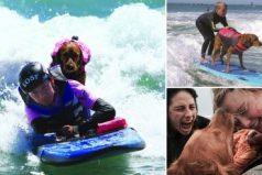 Ricochet: una perra que surfea junto a personas con capacidades diferentes