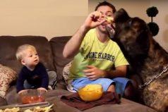 Bebés riéndose junto a perros, ¡la amistad entre el humano y el perro comienza desde pequeños!