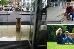 Este perro esperó en un hotel seis meses hasta conseguir que su elegida lo adoptara