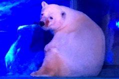 """Pizza, """"el oso polar más triste del mundo"""" que vive en un centro comercial en China"""