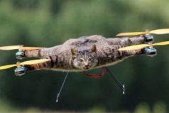 El hombre que convirtió a su gato mascota muerto en un dron