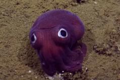 La extraña criatura que apareció en el fondo del mar ¡Parece salida de PokémonGo!