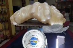 Pescador encontró y guardó perla gigante por 10 años sin saber que valía $100 millones de dólares