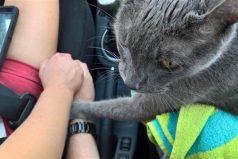 Este gato enfermo tomó las manos de sus dueños en su último viaje al veterinario antes de morir