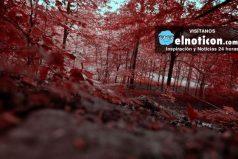 8 bosques que parecen encantados ¡Son hermosos!