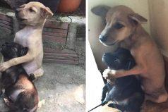 Estos cachorros callejeros no dejan de abrazarse desde que fueron rescatados