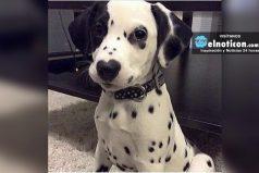 Este perrito tiene en su nariz una pequeña demostración de su ternura