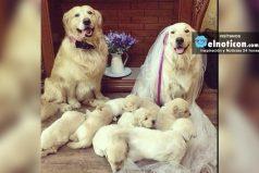 ¡Qué vivan las familias felices!