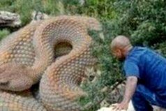 Conoce las 5 serpientes más grandes del mundo ¡Impresionantes!