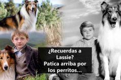 ¿Recuerdas a Lassie? Este video te va a encantar ¡Like por esos perros que nos hacen felices!