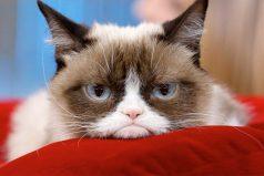 Estos son los 12 animales más famosos de internet ¡Divinos!