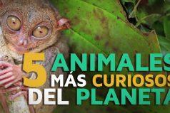 Los 5 animales más CURIOSOS del planeta ¡Quedarás con la boca abierta!