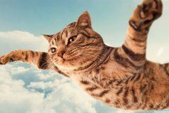 Los gatos más graciosos y tiernos del mundo ¡Like si amas los gatos!
