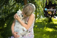 8 razones para adoptar un perro ¡Será la mejor decisión que tomarás en mucho tiempo!