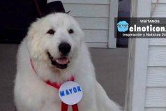 Duke, el perro que fue nombrado alcalde de un pueblo de EE.UU