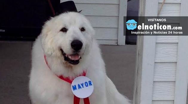 Duke, el perro que fue nombrado alcalde en un pueblo de EE.UU