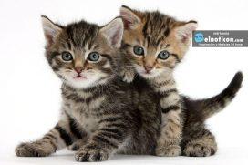 Conoce cuál es el país que más ama los gatos ¿Será Colombia?