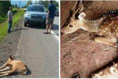 Se detuvieron tras ver una colisión en la carretera y se convirtieron en los héroes de un ciervo