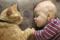 ¿Por qué los gatos les gusta dormir con los humanos? ¡Quedarás ASOMBRADO!