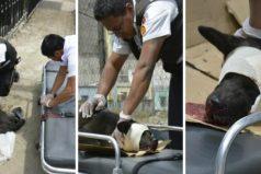 Dos bomberos fueron más allá de su deber para salvar a un pobre perrito atropellado
