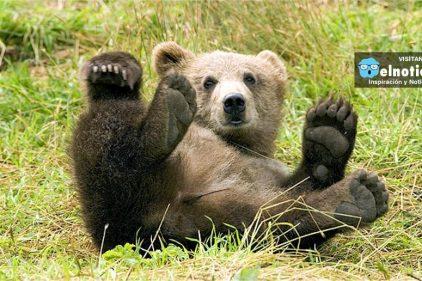 Esta familia de osos decidieron refrescarse con algunos humanos en un lago