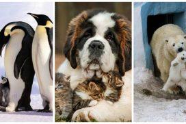 Imágenes de familias muy simpáticas ¡Los animales también saben posar para la foto!
