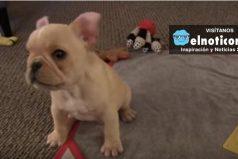 Él es Brody Brixton, el perro más obediente en la web