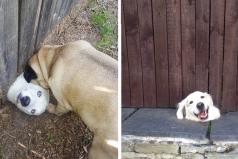 Estos perritos te robarán el corazón cuando veas lo que hicieron para saludar a sus vecinos