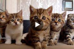 ¡Los gatitos más tiernos reunidos en un único video! Seguro que mueres de ternura