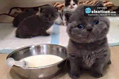 Estos son los gatos más ADORABLES que verás en tu vida. ¡Son hermosos!