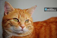 Consejos para entrenar a tu gato