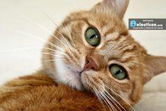 ¿Sabes por qué tu gato muerde o aruña cuando lo acaricias?