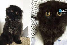Conoce a Gimo, el gato con los ojos más grandes y seductores ¡Quedarás hipnotizado!