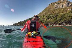 ¡ASOMBROSO! Una orca salvaje nada desde hace años al lado de su amigo en Nueva Zelanda