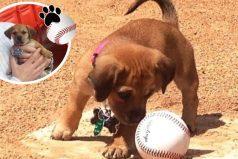 Daisy, una perrita que lloraba completamente abandonada ¡Ahora es parte de un equipo de béisbol!
