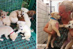 Estos cachorros fueron salvados de volverse comida humana viajando kilómetros para buscar amor