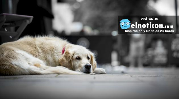 Cada día más venezolanos abandonan sus mascotas en la calle