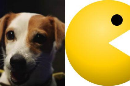 El perro especialista en jugar Pacman  ¡No te lo puedes perder, es espectacular!