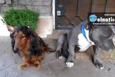 Uno de estos dos perros dañó algunas cosas de su amo y se delató solo ¡Adivina quién fue!