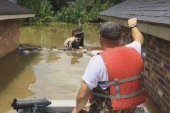 Se convirtió en un verdadero héroe luego de rescatar a perritos pitbull en una terrible inundación