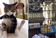 Estos gatos que se tomaron en serio aquello de ser raros