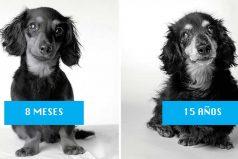 Cómo envejecen los perros: un fascinante y enternecedor proyecto de fotografía