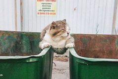 Gatos… Les importa unpepino laopinión pública