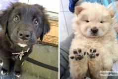 Estos perritos son ladosis justa deternura para aliviar tanto estrés