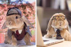 Conoce a PuiPui, el conejo más fashionista y glamoroso de Instagram ¡Intenta no enamorarte!
