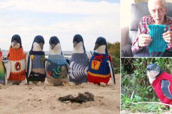 Un hombre de 109 años teje suéteres para rehabilitar pingüinos