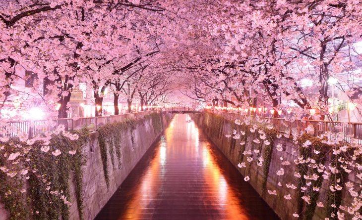 Conoce los túneles de arboles más hermosos del mundo ¡Hay que ir a visitarlos!