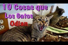 10 cosas que los gatos odian ¡Son divinos!
