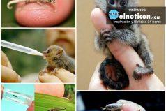 Los 10 animales más pequeños del mundo ¡Son hermosos!